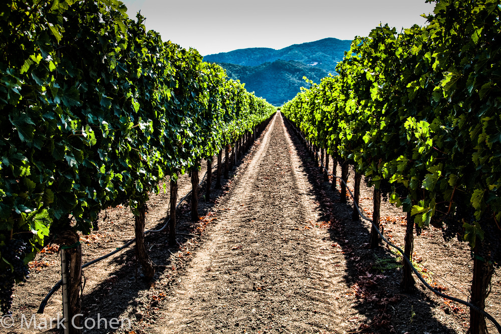 Vineyard no.7, Napa Valley, 2014
