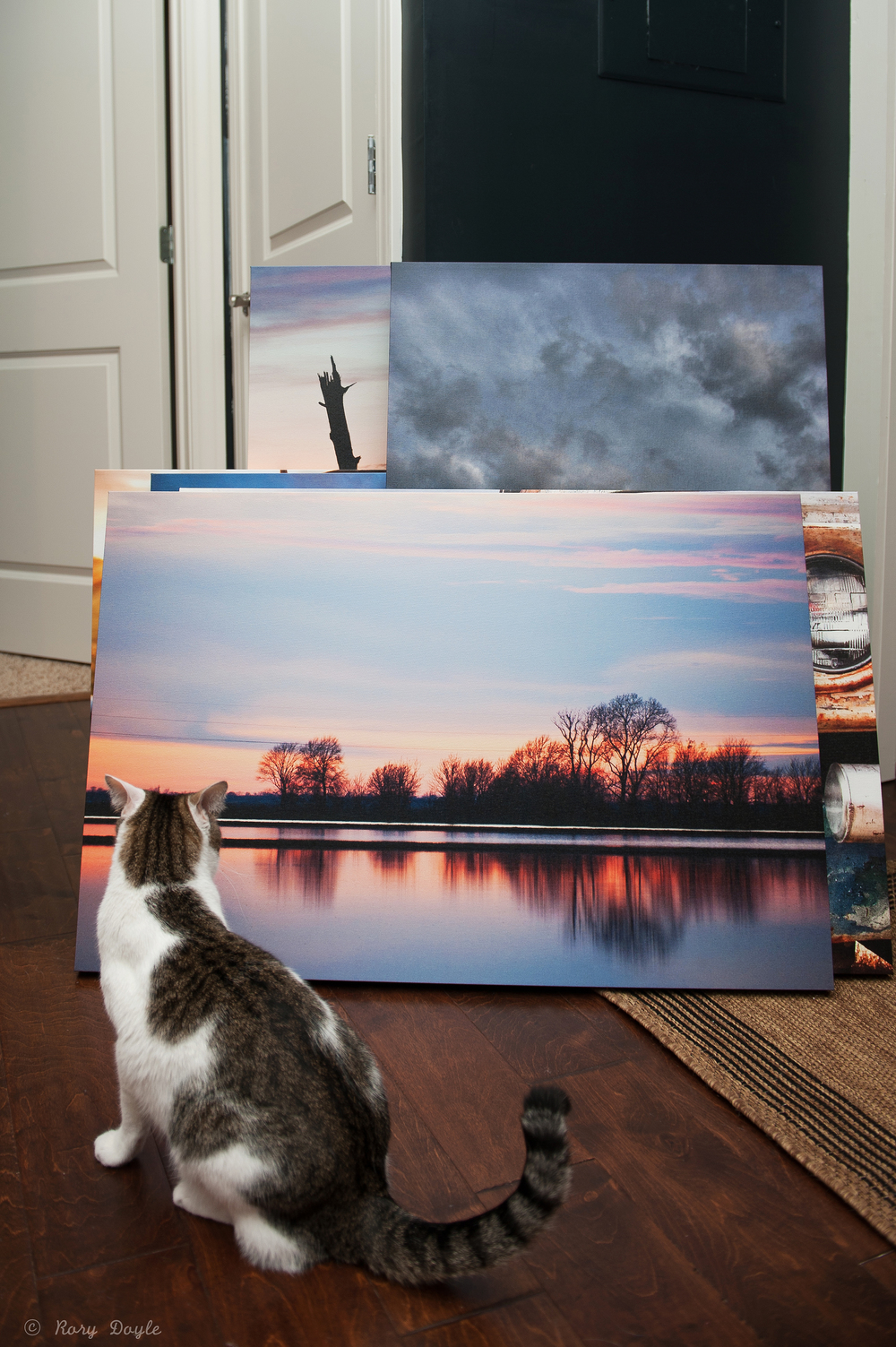 Sunny Canvas.jpg