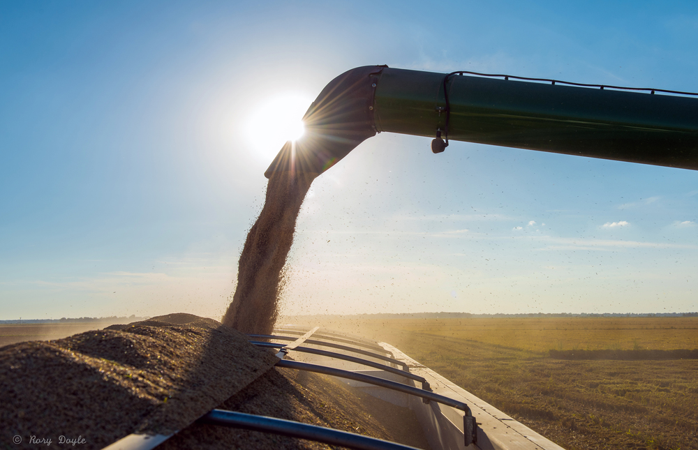 Augzzi farm harvest edits- 9.JPG