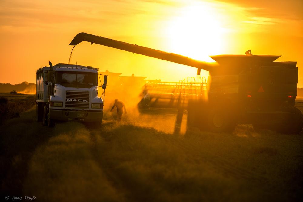 Augzzi farm harvest edits- 14.JPG