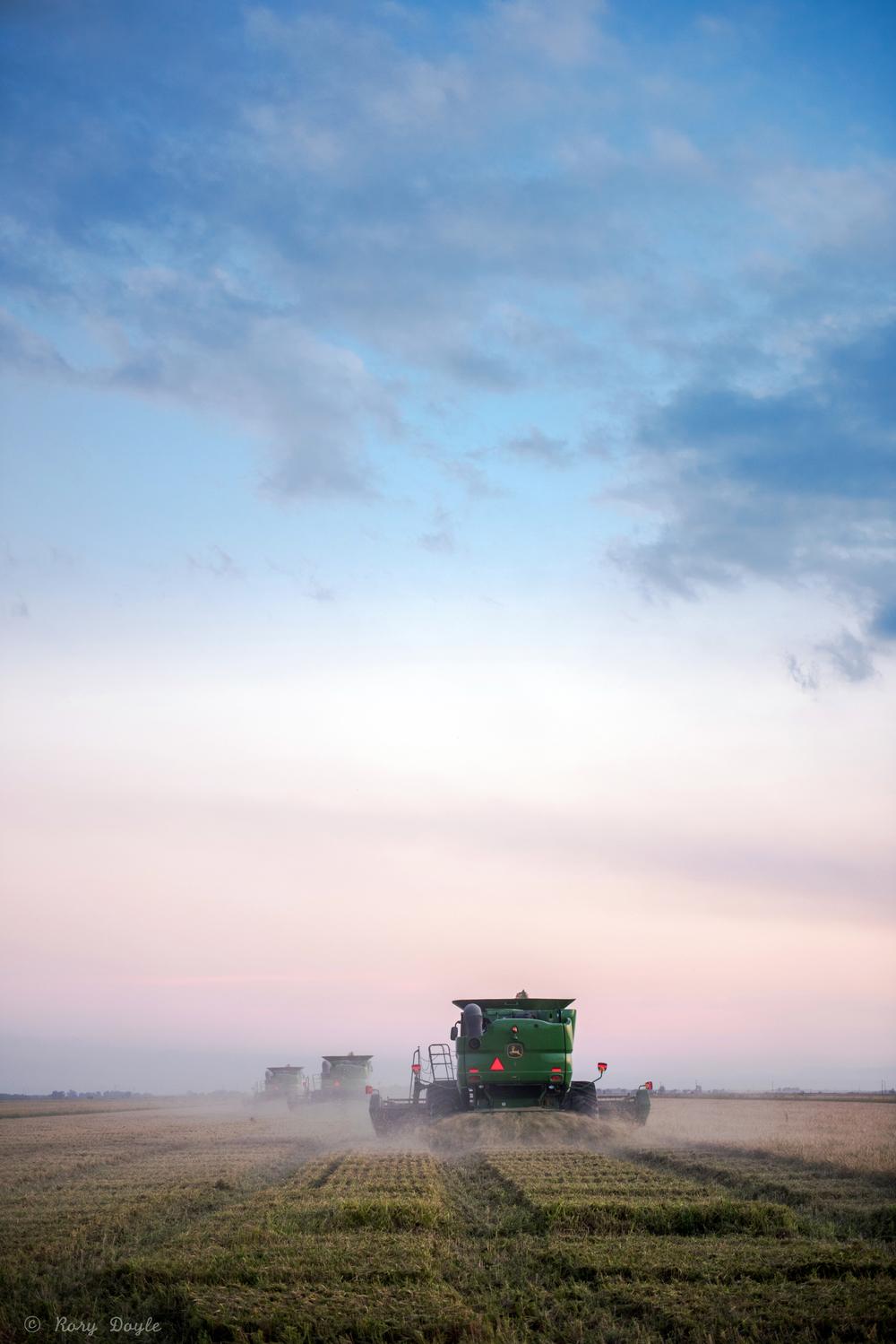 Augzzi farm harvest edits-3.JPG