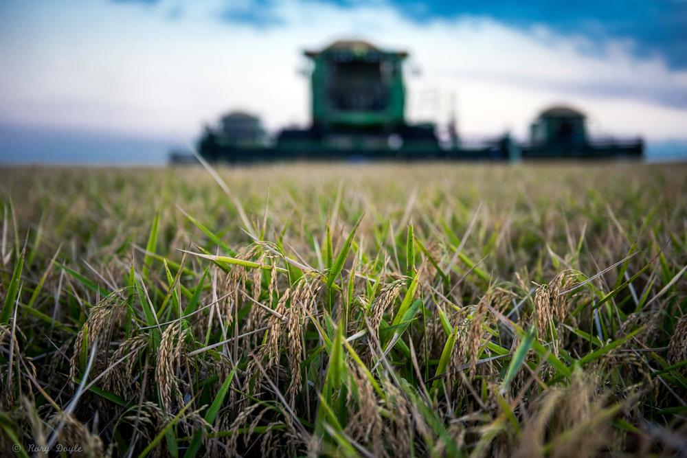 Augzzi farm harvest edits-4.JPG