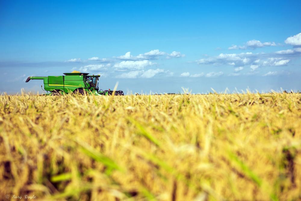 Augzzi farm harvest edits-10.JPG