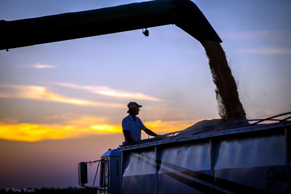 Augzzi farm harvest edits-12.JPG