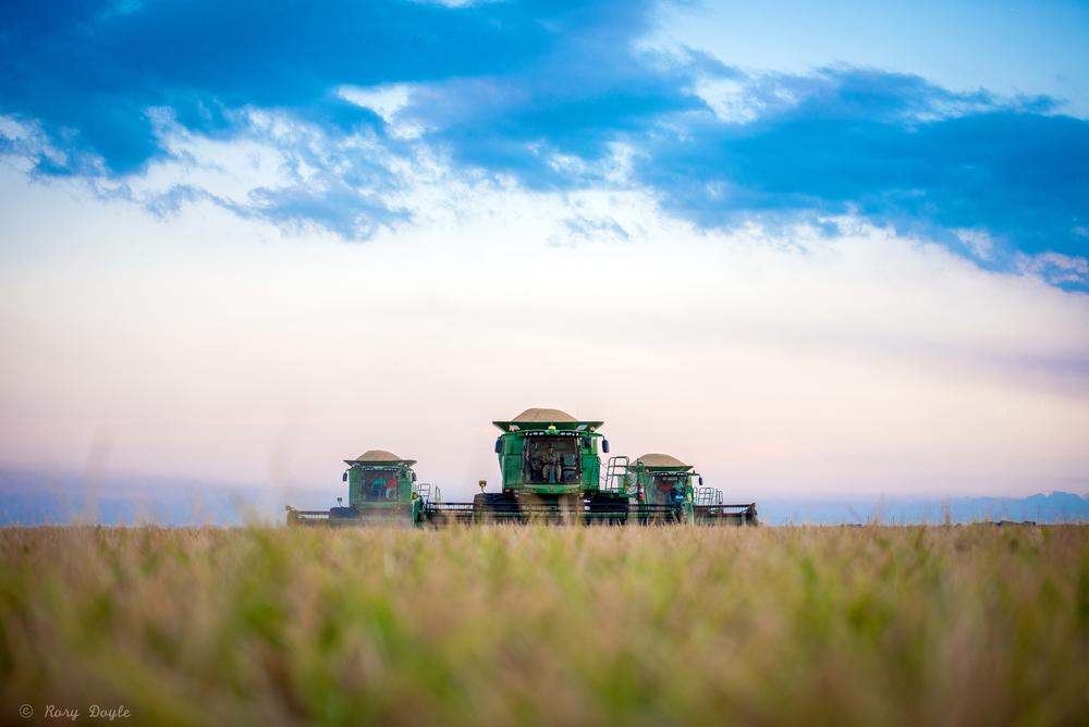 Augzzi farm harvest edits-13.JPG