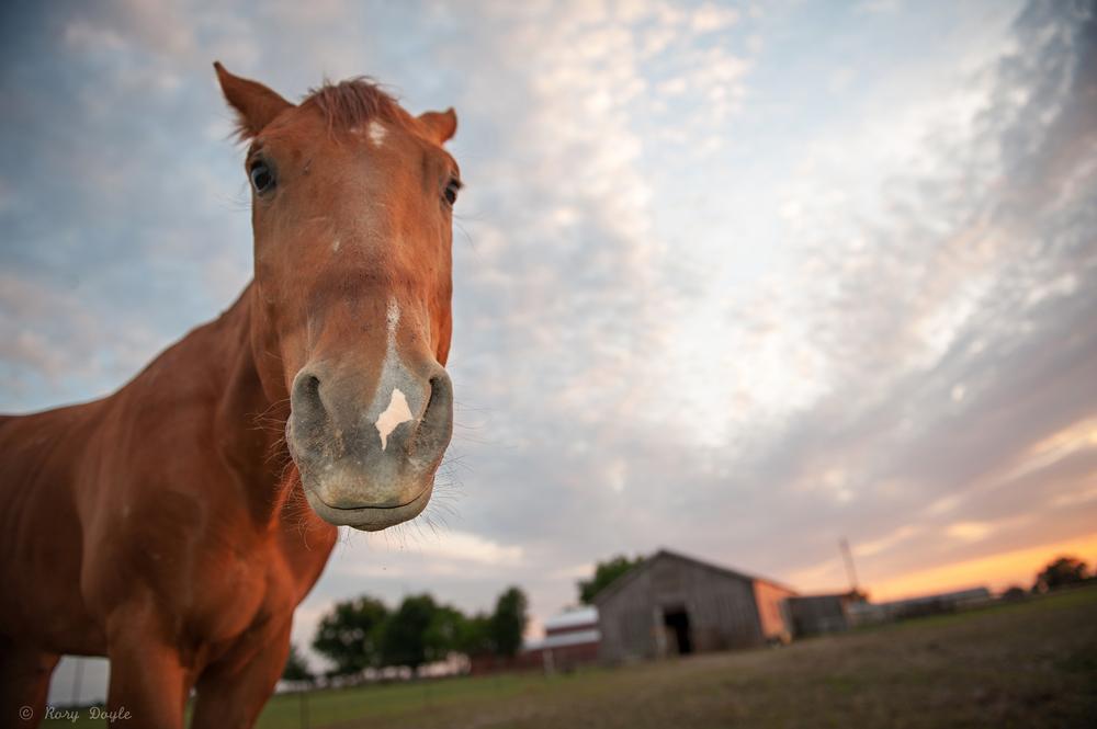 horse sunset-3.jpg