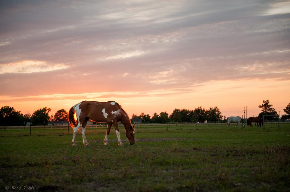 horse sunset-6.jpg