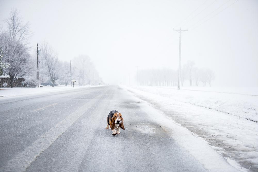 delta dog snowSMALL.jpg