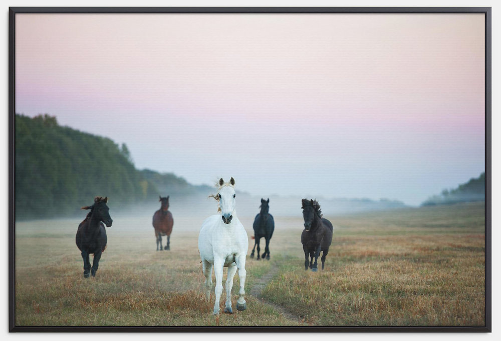 horse canvas.jpg