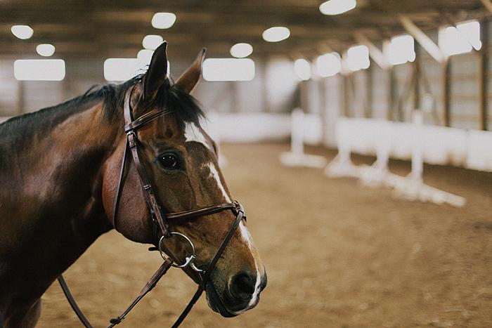 horse-stables-fonthill-070.jpg