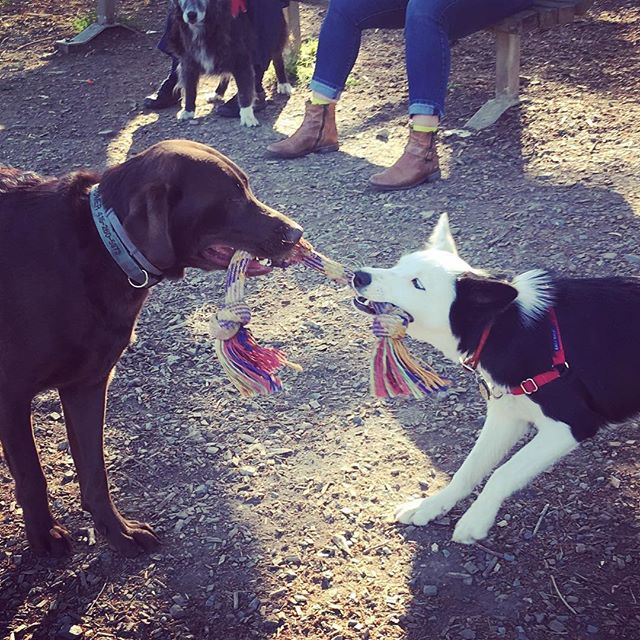 Tug-of-war ! #marindogs