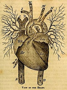 """Anatomy, Physiology and Laws of Health"""" (1885) by J.H. Jordan, M.D."""