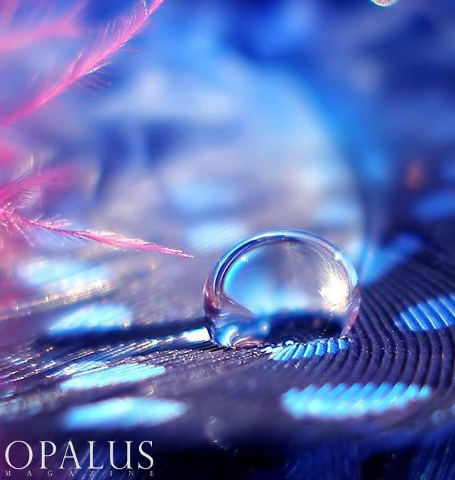 PHOTOGRAPHER - POLLY WILLIAMS