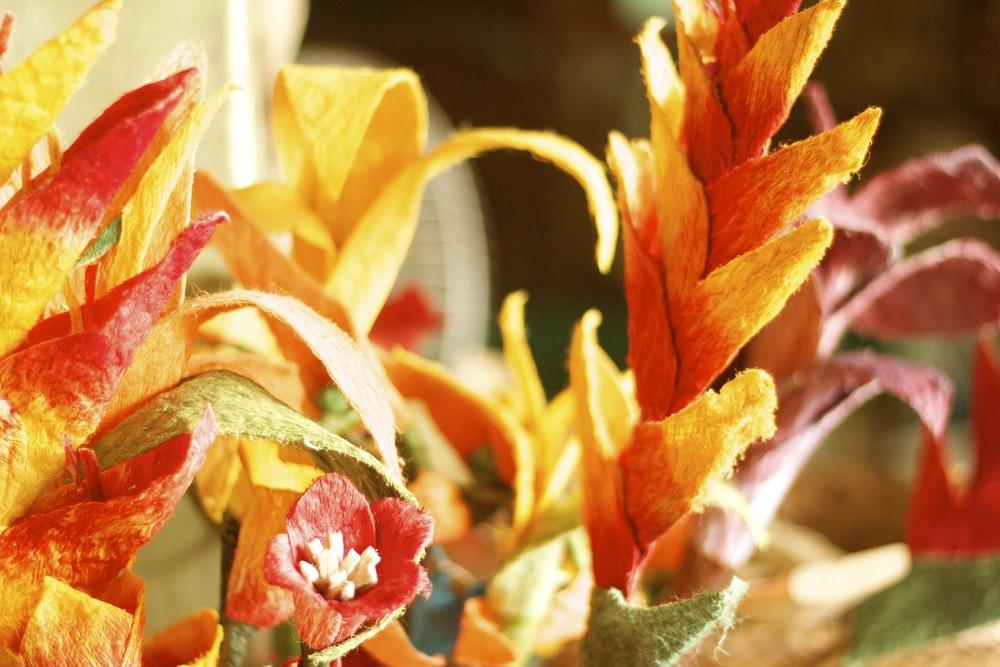 Flores. Quibdó, 2013.