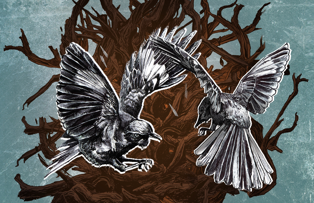 birds fighting 11x17.jpg
