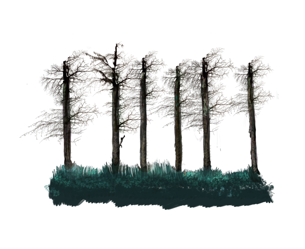 NO LEAVES TALL TREE STALK.png