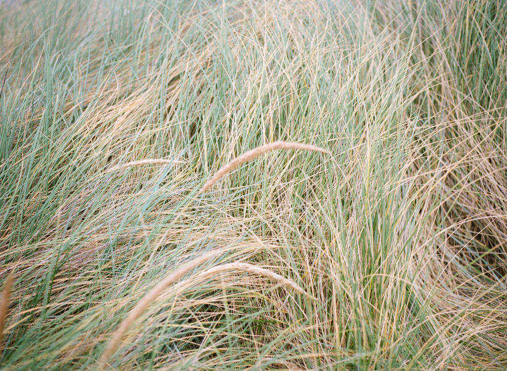 639-washington-dc-film-photographer.jpg