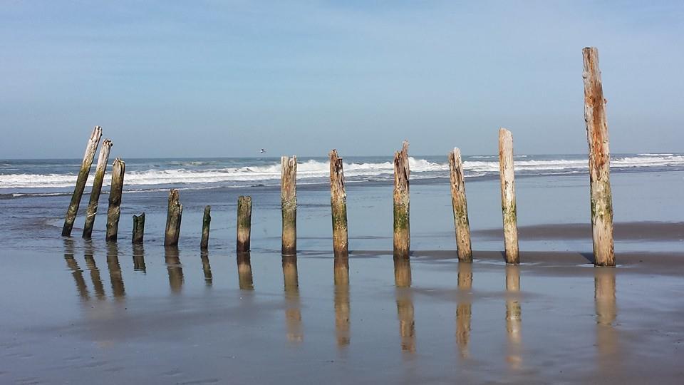 ocean beach posts light.jpg