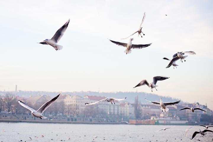 radostina_photography_the_birds.png