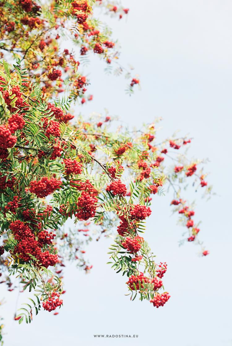 radostina_photography_travel_bulgaria_detail_tree.png
