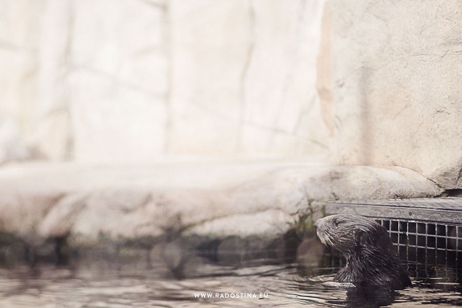 radostina_monterey_bay_aquarium_04a.png