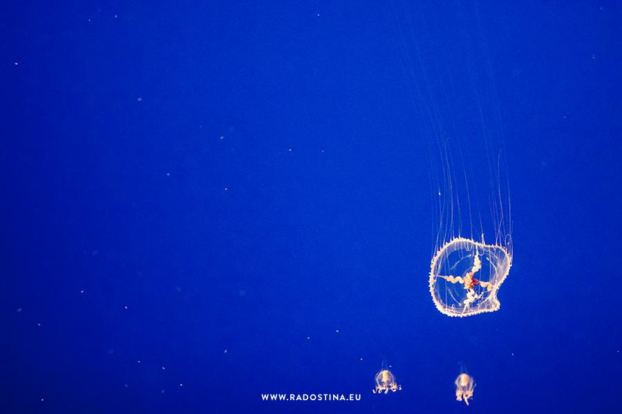 radostina_monterey_bay_aquarium_07a.png