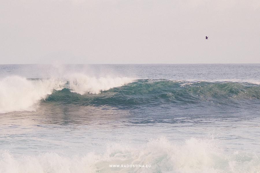 radostina_surfers_02b.png