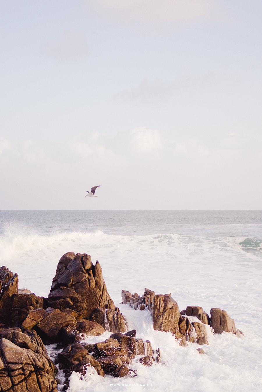 radostina_surfers_08.png