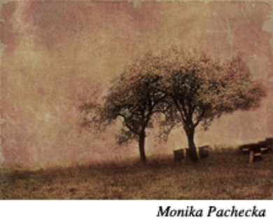 Monika Paches