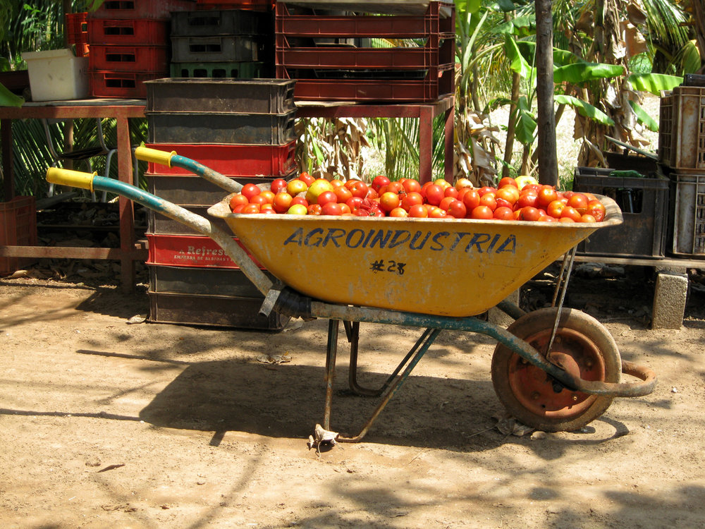 Cuban Moments :: Tomates