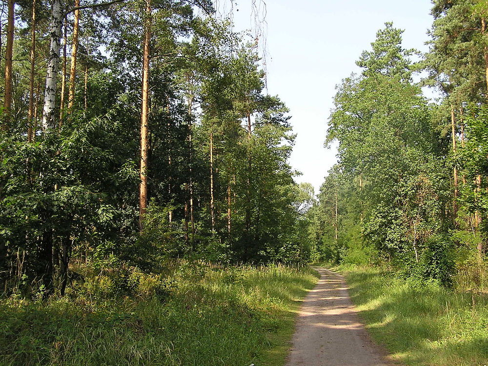 Summer trails in Gurnewald, Berlin.