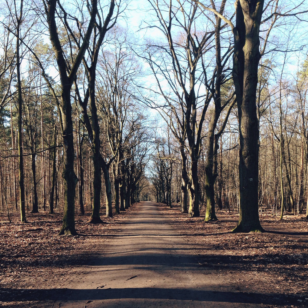 Late autumn trails in Grunewald, Berlin.