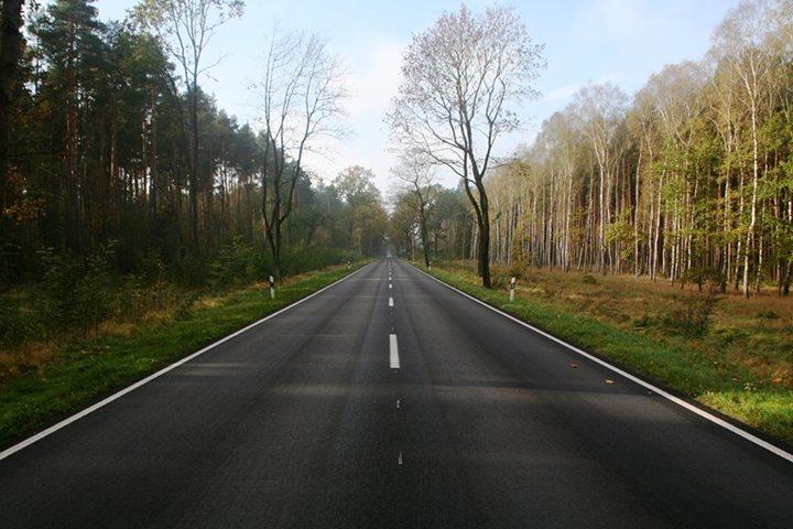 Roads through Brandenburg forest.