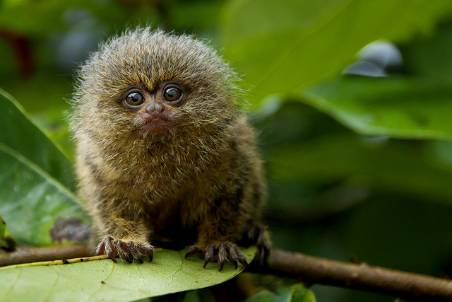 Cute and rare monkeys stolen from Dortmund zoo.