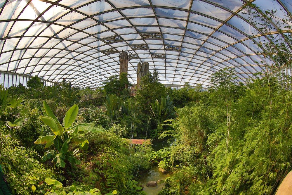 The indoor rain forest named Gondwanaland.