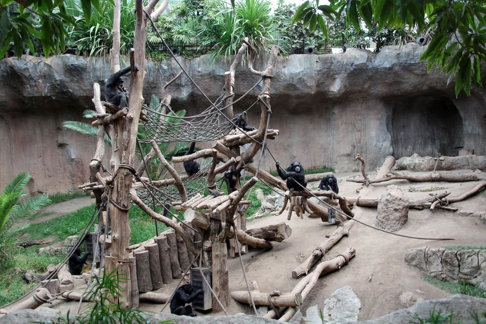 Pongoland is the new monkey house with many happy monkeys.