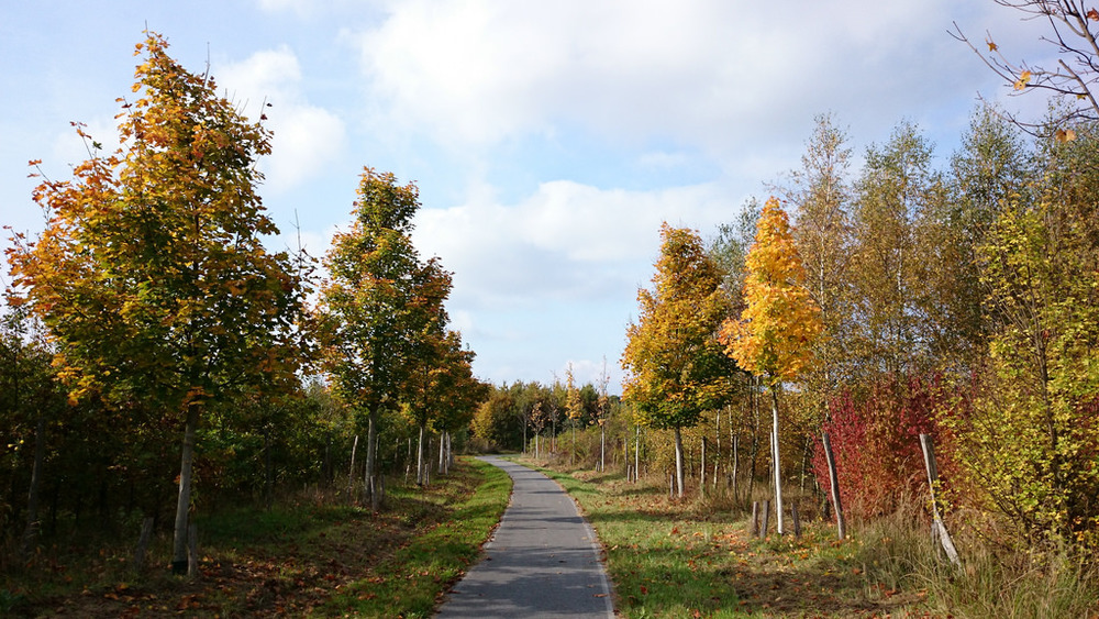 Paths all over Brandenburg to explore. Beautiful landscapes to experience.