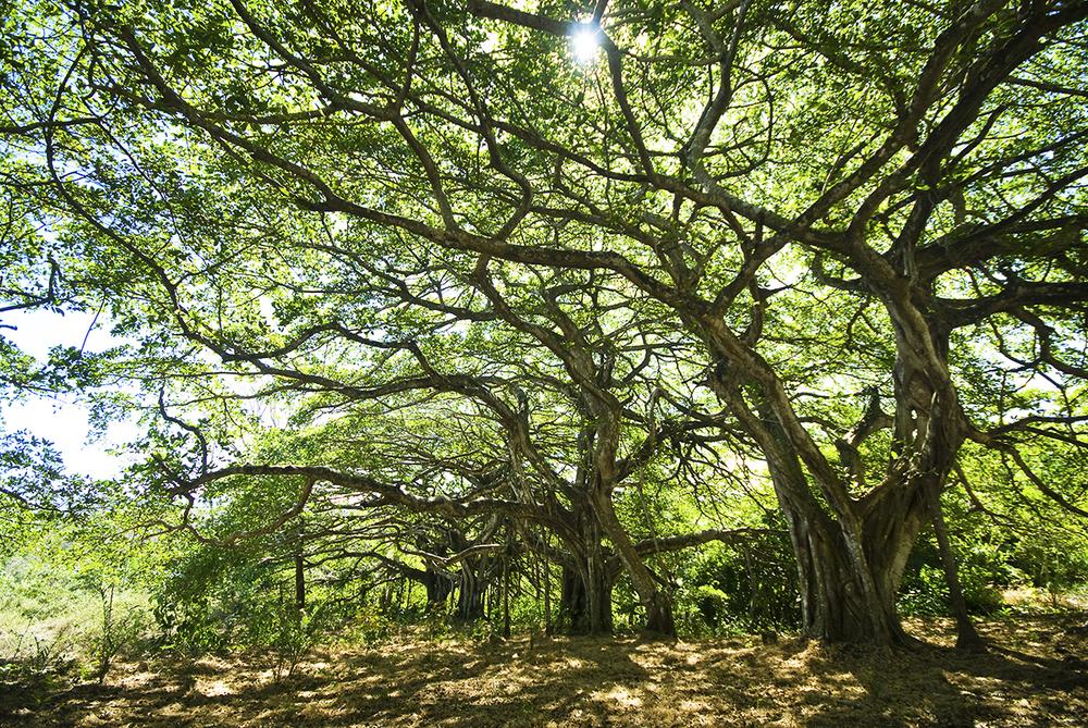 Trees onsite