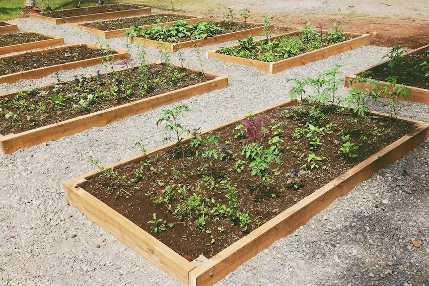 FruitPlanting_14.jpg