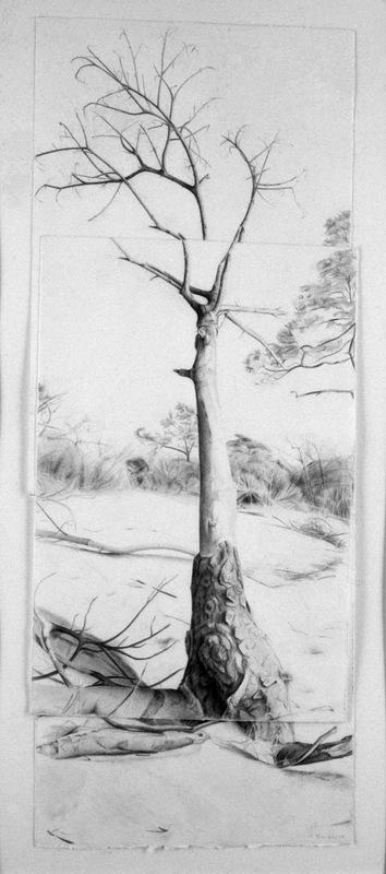 """Portrait of a Dead Tree, 20"""" x 38.5"""""""