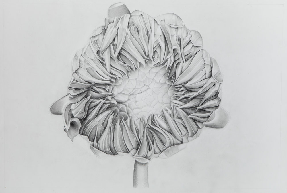 Untitled Flower.jpg