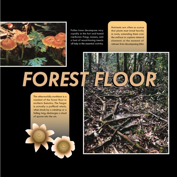 NewForestFloorCover.jpg