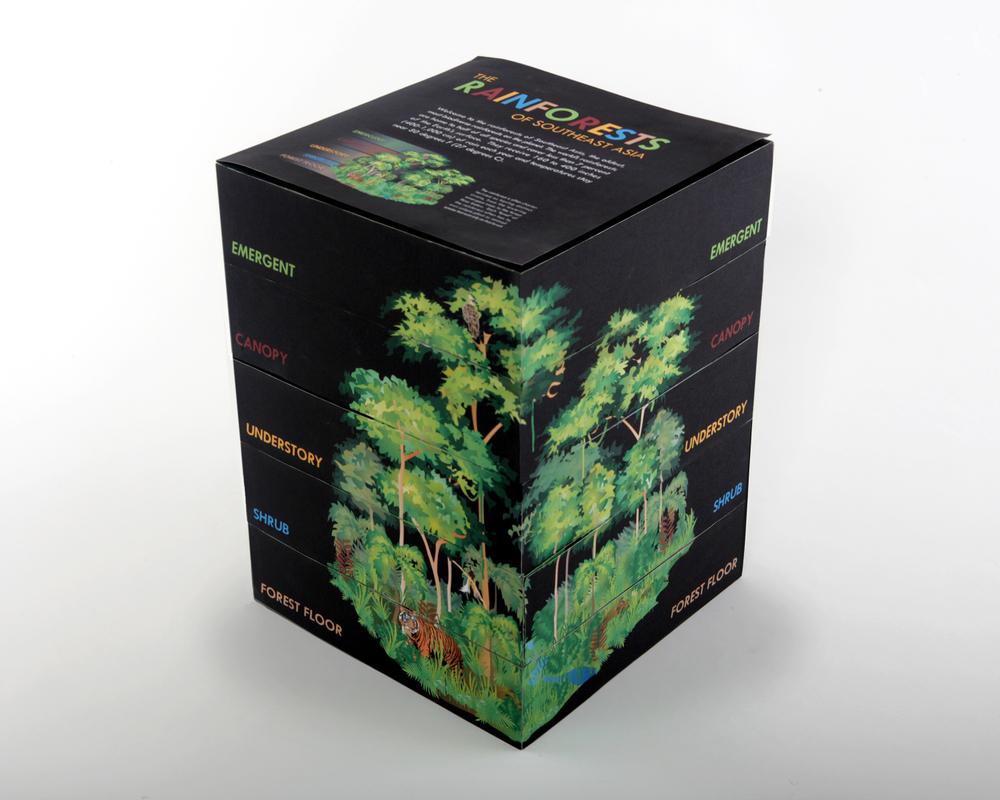 RainforestBoxPic.jpg