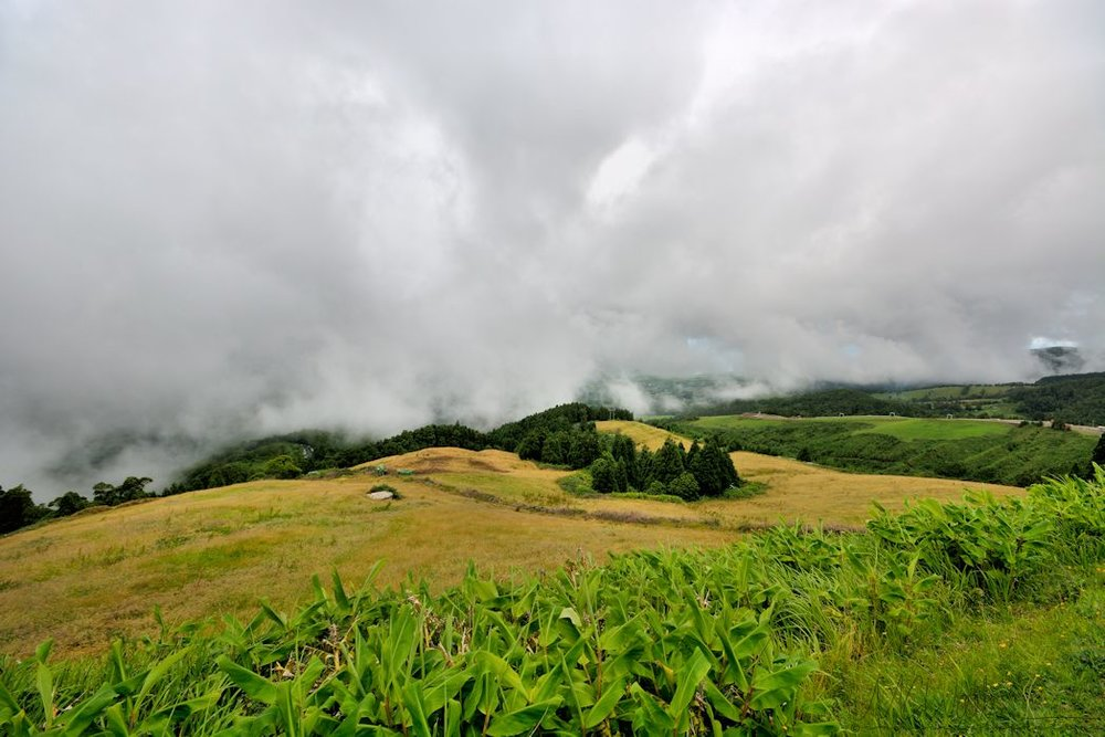 With exceptionally humid climate, getting up into the clouds incredibly easy. Just pick a mountain road and drive uphill for a short time