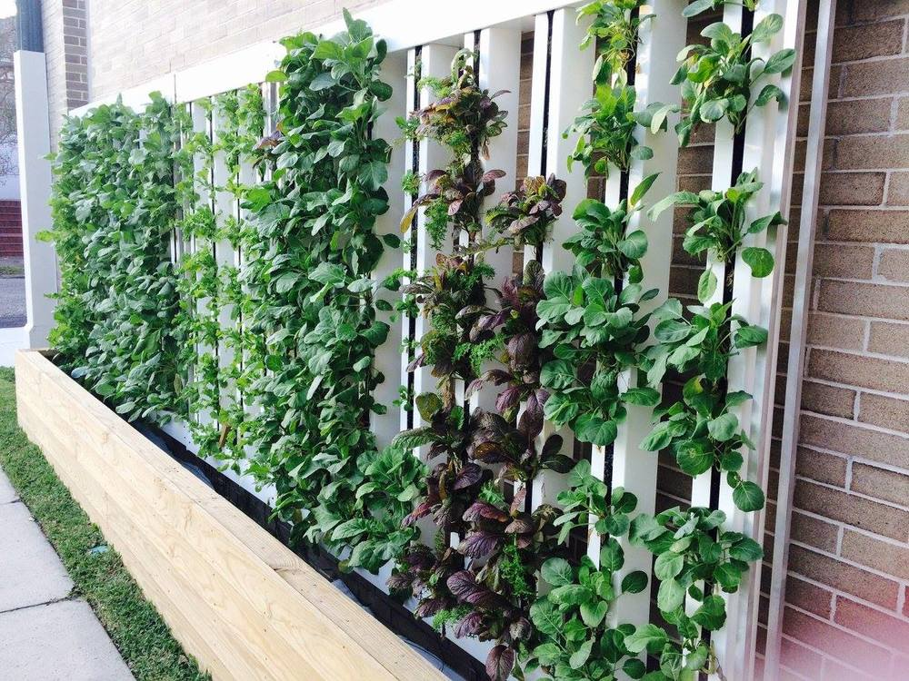 A hydroponic greenwall grows the freshest leafy greens and herbs.