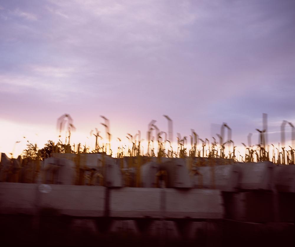 Snorkels at Sunrise, 2014