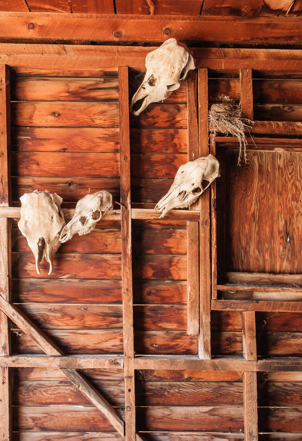 Wyoming 2011_081.jpg