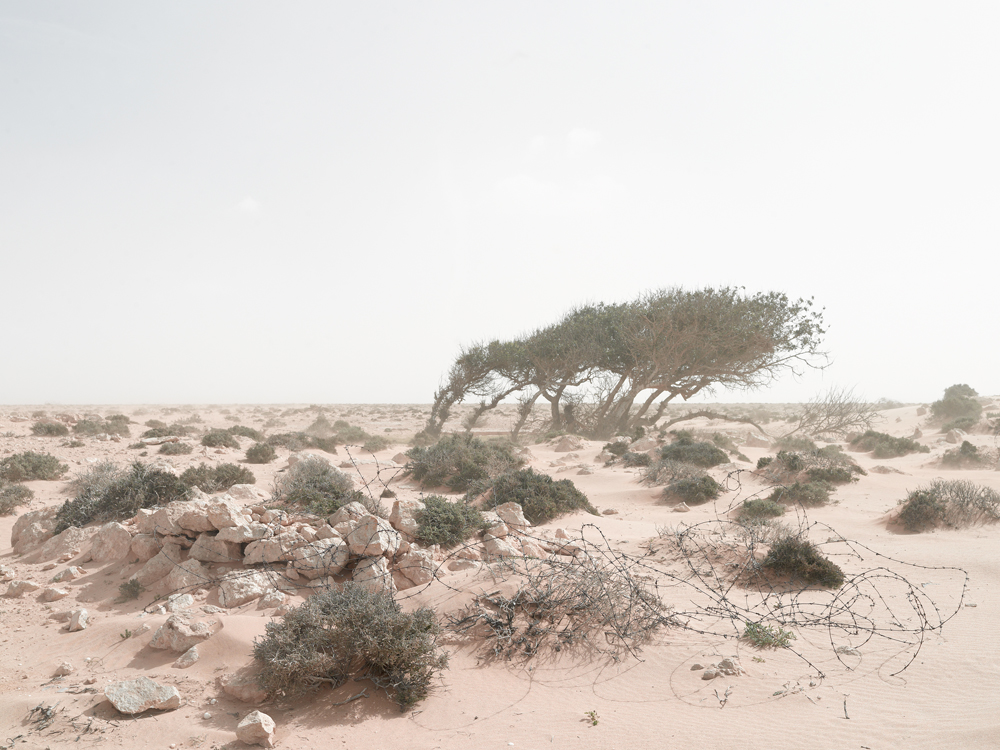 Defensive Position in an Encroaching Sandstorm, Alem Hamza Battlefield, Libya