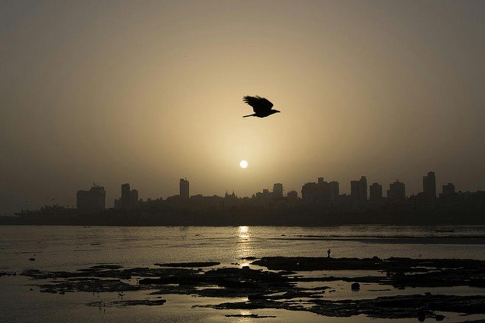 © Chirag Wakaskar