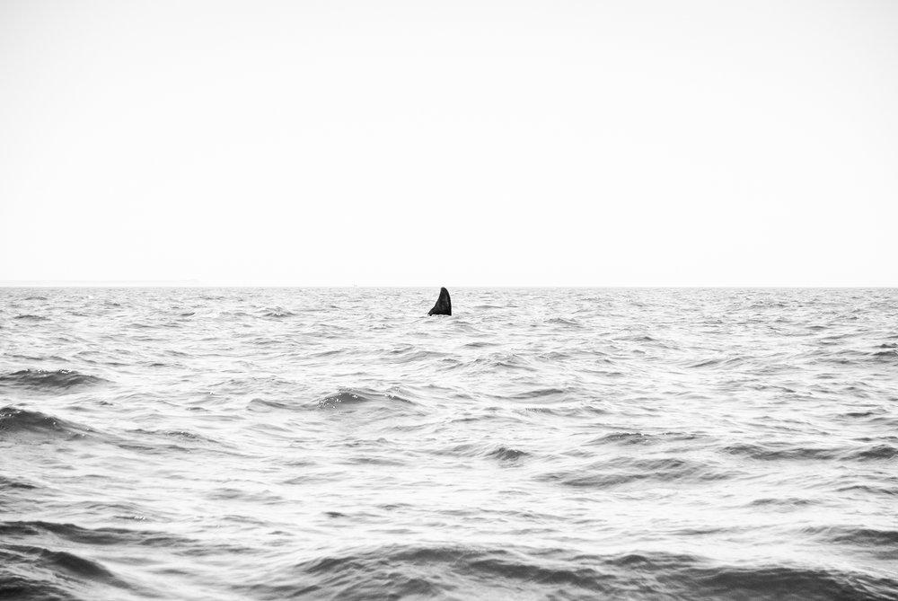 © Nathan Goldenzweig